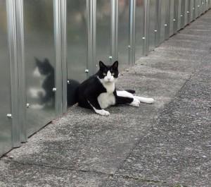 地域を歩いていて出会った猫
