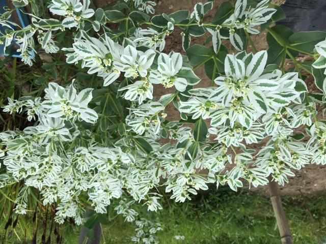 image  田舎の花